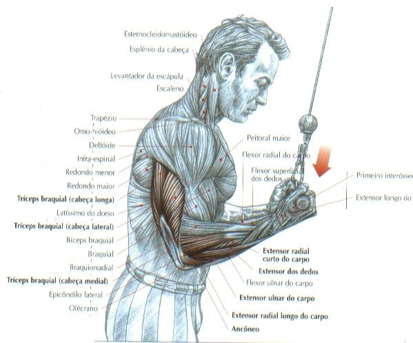 triceps-no-pulley-em-supinacao1